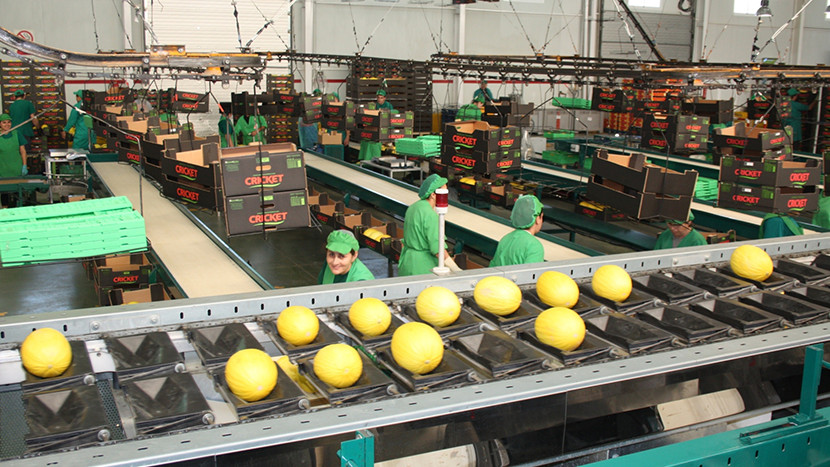 Melon production line