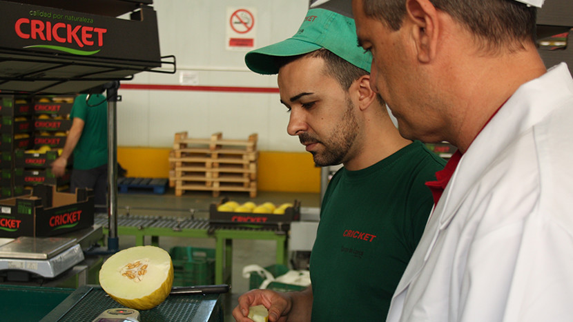 An employee preparing a melon